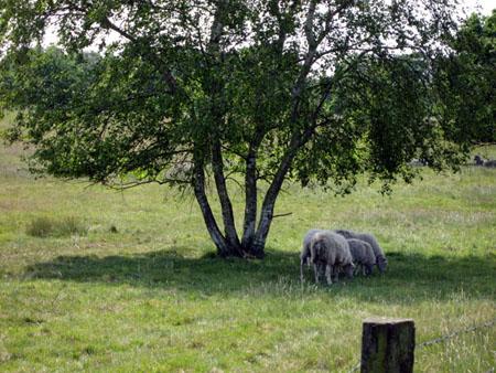 Das Sheep-Team?