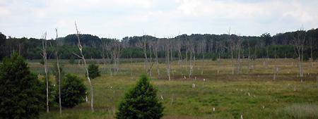 Ich sehe tote Bäume...
